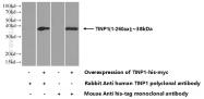 16230-1-AP - NSA2 / TINP1