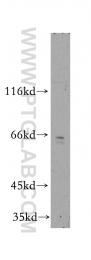 13311-1-AP - TRAM2