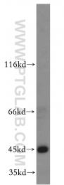 13618-1-AP - TTL