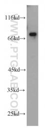 10392-1-AP - USP2