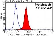 19140-1-AP - RNF108 / VPS11