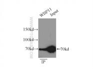 10316-1-AP - WBP11