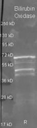 R1066PS - Bilirubin oxidase