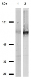 SM3024F - CD44
