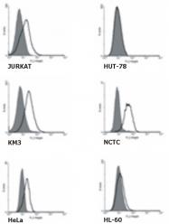 SM3132F - TNFRSF21 / Death receptor 6 (DR6)