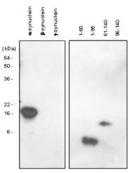 SM6028 - Alpha-Synuclein / SNCA