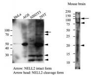 AM09386PU-N - NELL2