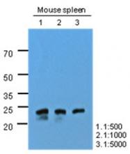 AM09393PU-N - OSTF1