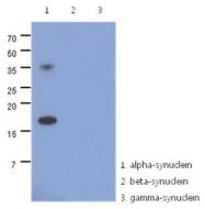 AM50030PU-N - Alpha-Synuclein / SNCA
