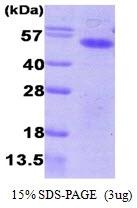 AR09224PU-L - Aurora kinase A