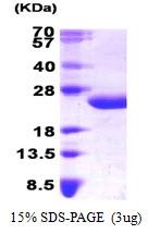 AR09233PU-L - Interleukin-6 / IL6