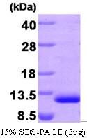 AR09280PU-L - MDC / CCL22