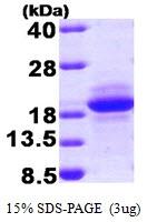 AR09341PU-L - MCFD2