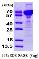 AR09396PU-L - Cornulin