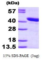 AR09464PU-L - HSPBP1