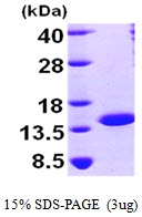 AR09532PU-L - NTF2