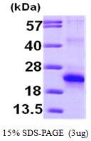AR09533PU-L - EIF5A2