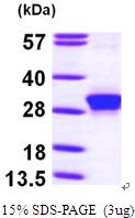 AR09589PU-L - RND3 / ARHE