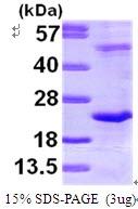 AR09607PU-N - DR1 / NC2-beta