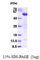 AR09622PU-L - Testin / TES