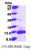 AR09634PU-N - MCP-4 / CCL13