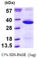 AR09639PU-L - GNPDA1