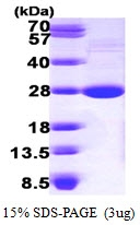 AR09658PU-L - LYPLA1