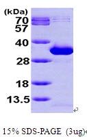 AR09679PU-L - NANP