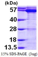 AR09707PU-L - CCT1 / TCP1
