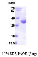 AR09727PU-L - RQCD1