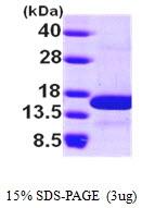 AR09752PU-L - NHP2L1