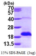 AR09753PU-L - MSRB2