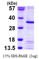 AR09845PU-L - Peflin / PEF1