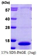 AR39035PU-L - CDC26