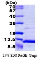 AR39049PU-L - NAP2 / PPBP / CXCL7