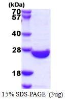 AR39052PU-L - SENP8