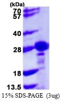 AR39053PU-L - CBX1