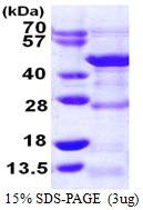 AR39071PU-L - DRG1 / NEDD3