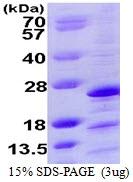 AR39073PU-L - Mimitin