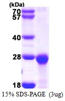AR39111PU-L - PCNP