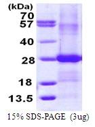 AR50045PU-N - Ephrin-B2
