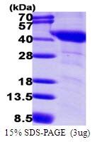 AR50049PU-N - G protein alpha inhibitor 1