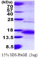AR50075PU-N - Betacellulin