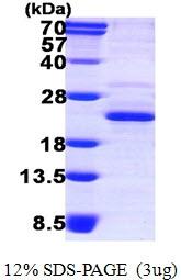 AR50206PU-N - XTP3TPA / DCTPP1