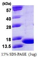 AR50300PU-N - Tumor necrosis factor (TNF-alpha)