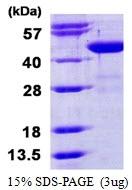 AR50304PU-N - BCAT1