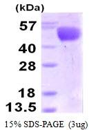 AR50306PU-N - Influenza A H3N2