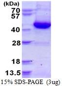 AR50311PU-N - G Protein alpha Inhibitor 3