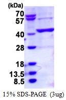 AR50347PU-N - BCAT2