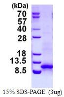 AR50349PU-N - CXCL1 / GRO-alpha